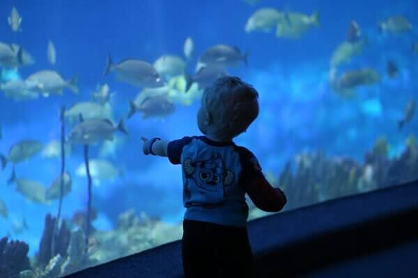 My toddler son is enamored with the fish at the aquarium