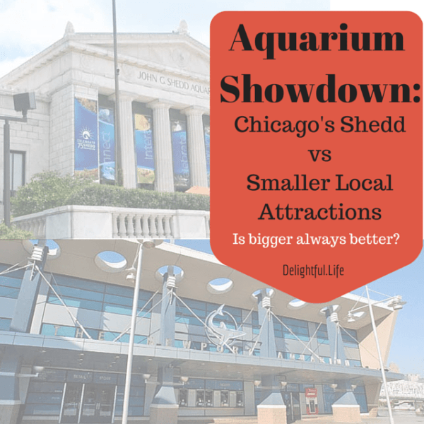 Aquarium Showdown