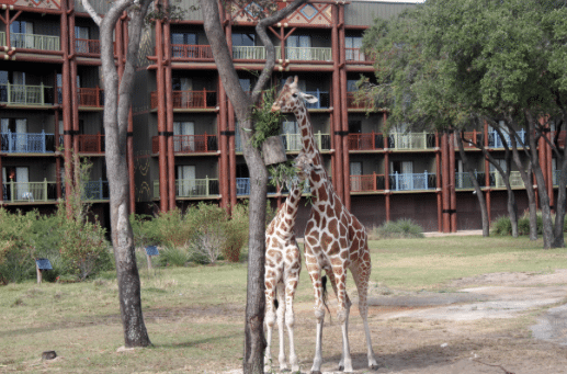Take a look at all of the animals around the Animal Kingdom Lodge