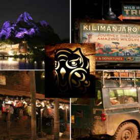 Things to Know Before Attending the DVC Safari Spectacular