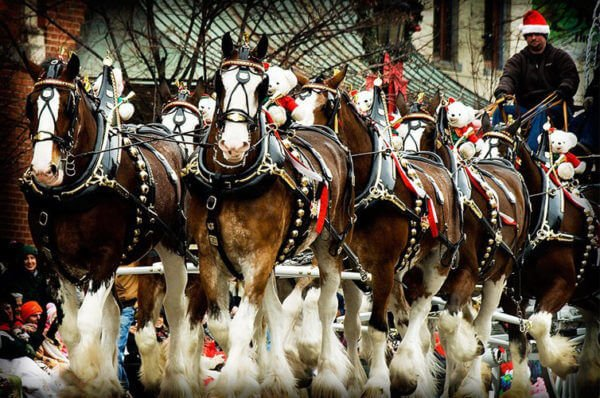 lebanon-horse-drawn-carriage-parade-festival
