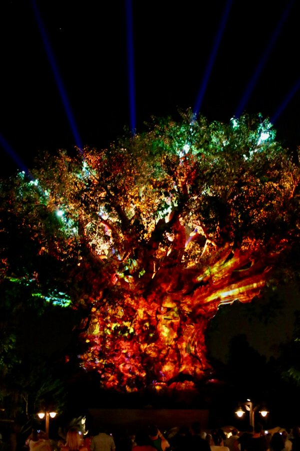 Animal Kingdom tree of life at night. On a solo trip to Disney World, I stood there for over an hour watching the Tree of Life Awakens