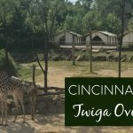 How to Sleep with the Giraffes at the Cincinnati Zoo