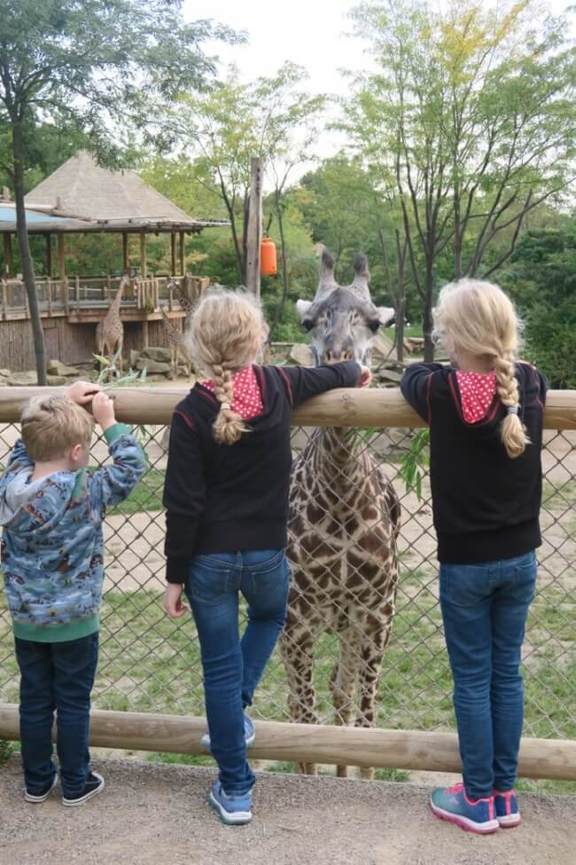 Three children feed a giraffe at the Cincinnati Zoo during the Twiga Overnight program
